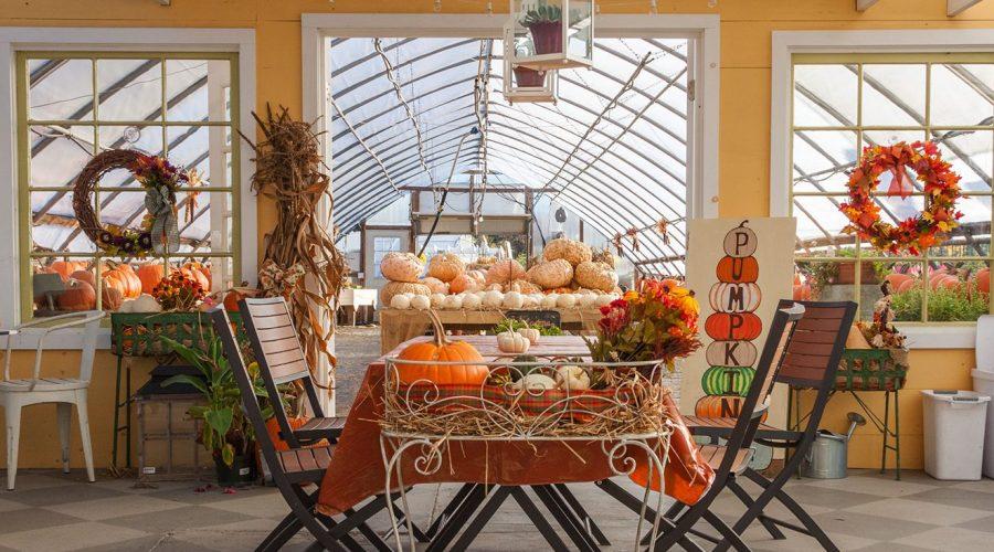 highland-avenue-greenhouse-pumpkins-small